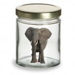 Putting The Elephant In The Jar